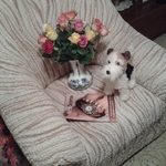 vera_stepankova_brno.jpg
