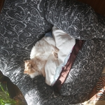 bozena_noskova_praha.jpg