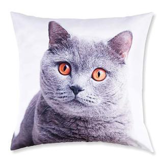 Dekorativní povlak na polštářek Britská kočka