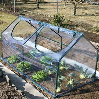 Zahradní fóliovník
