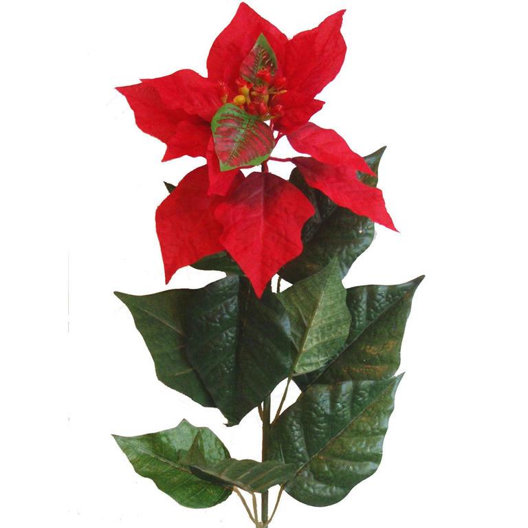 Vánoční hvězda (Poinsettia) 60 cm  - 1
