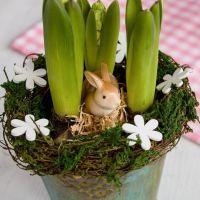 Jarní hyacinty